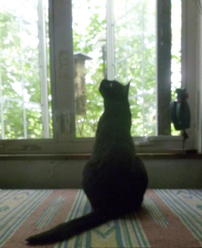 black cat by window