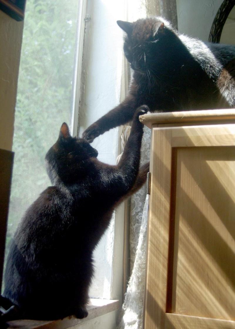 black cat hitting other black cat