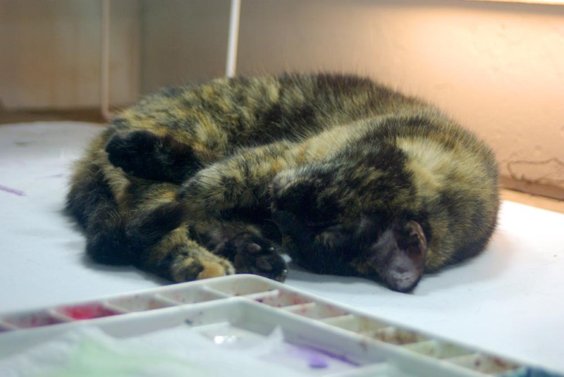 tortoiseshell cat curled up near watercolor palette