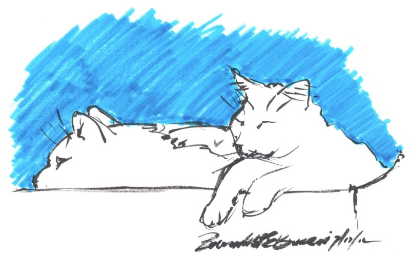 ink sketch of two cats on box