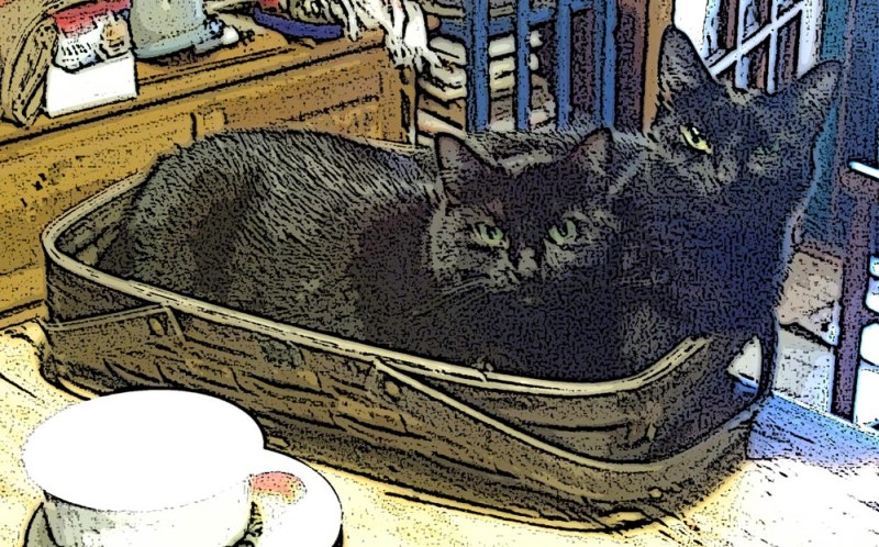 two black cats in a basket