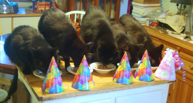five black cats eating