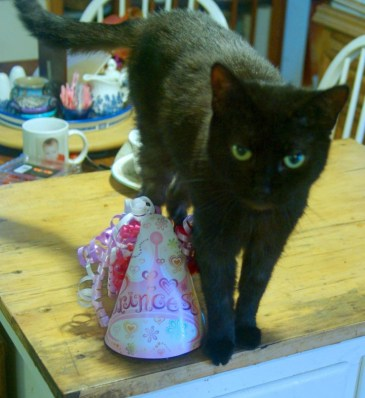 black cat with party hat