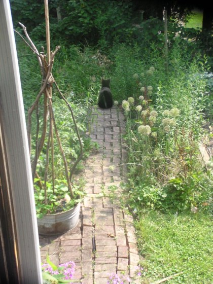 garden path with black cat