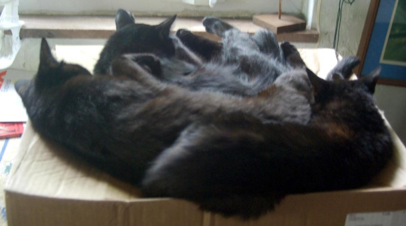 a puddle of cats