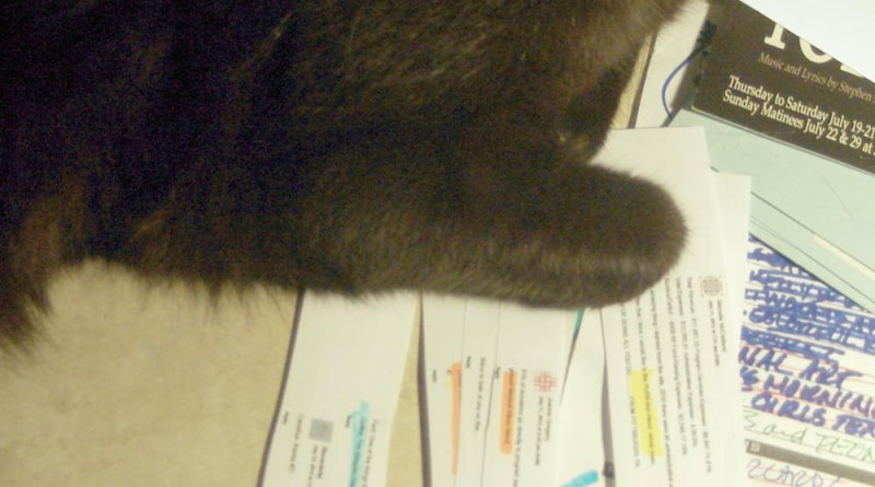 black cat with entries