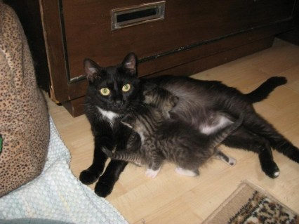 black cat with two kittens