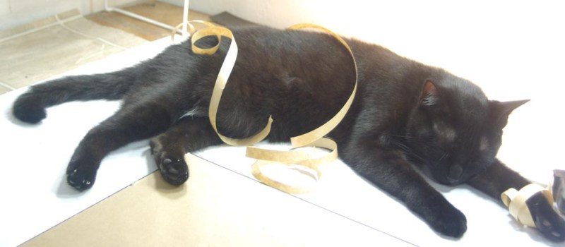 black cat sleeping with tape curlicues