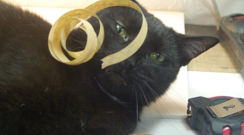 black cat with curlicues on his face