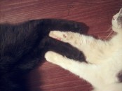 two cats holding paws