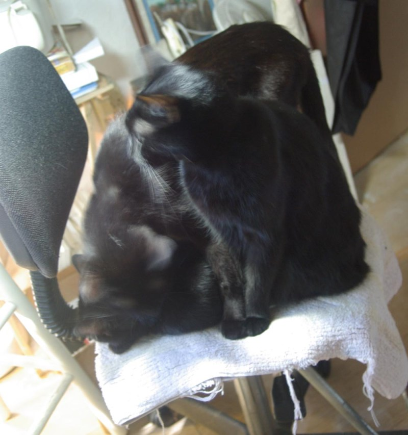 three black cats on chair