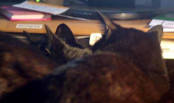 bunch of black cat ears
