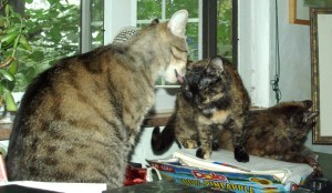 tabby cat bathing tortoiseshell cat with another in background