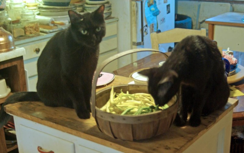 two black cats with basket of beans