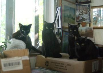 four black cats