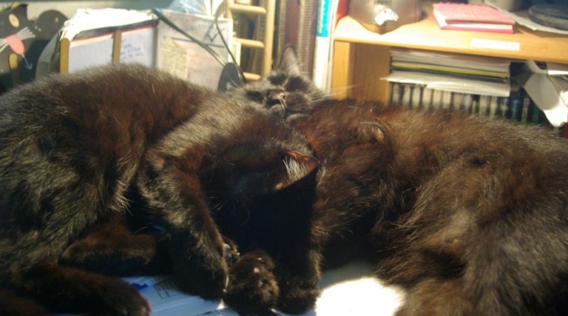two black cats cuddling on desk