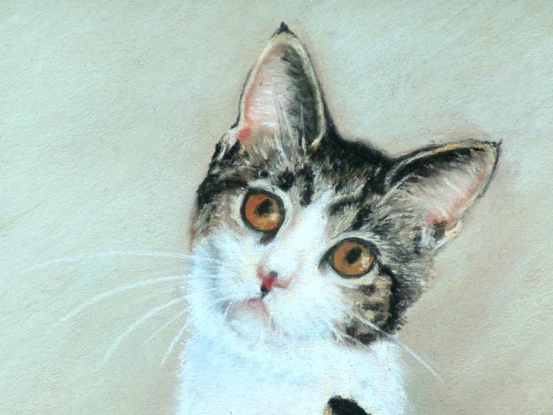 tabby and white kitten