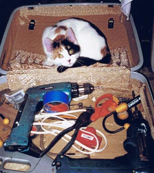 calico cat in toolbox