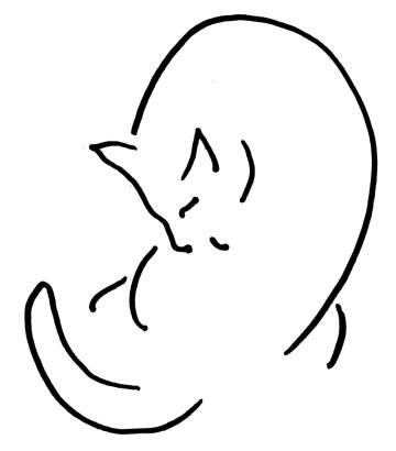 line sketch of cat bathing