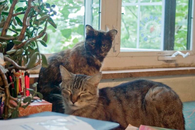tortoiseshell cat and tabby cat