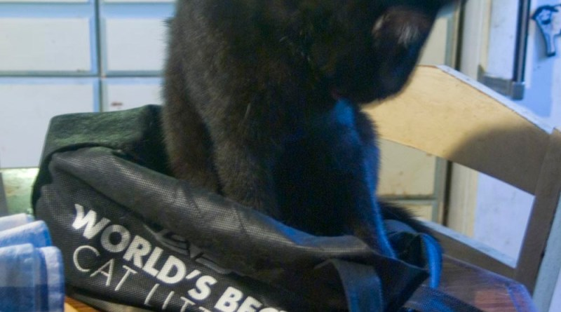 black cat bathing in shopping bag