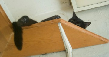 black cat on wooden shelf