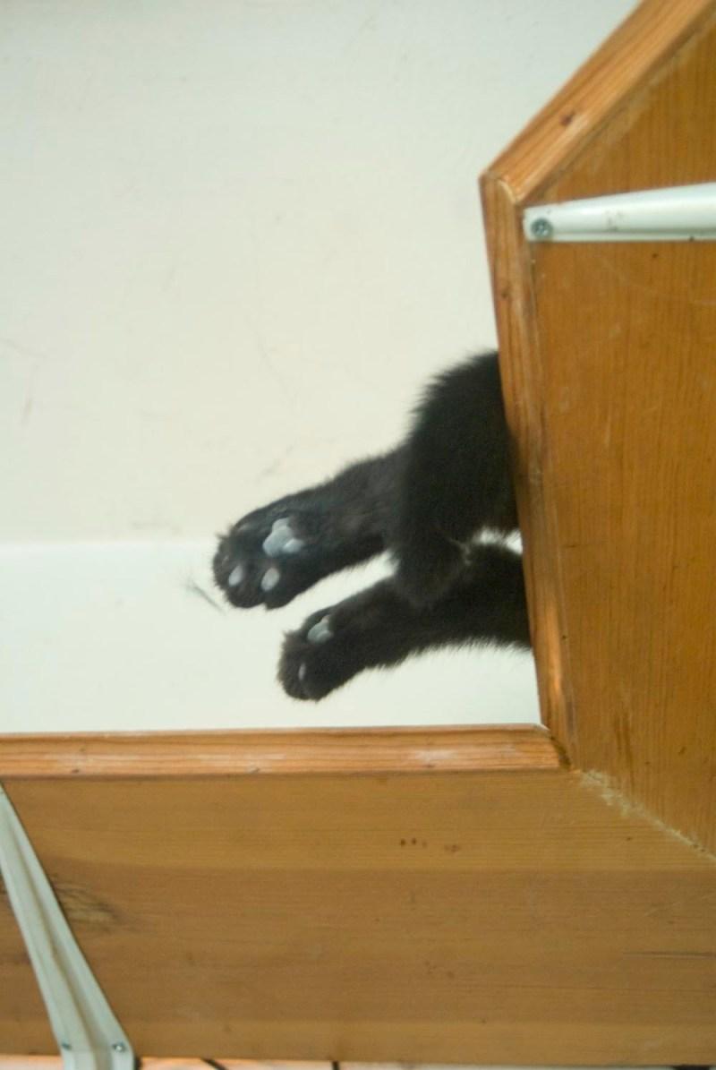 black cat toes on wooden shelf