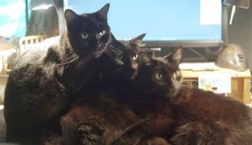 three black cats