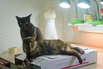 black cat and tortoiseshell cat on box