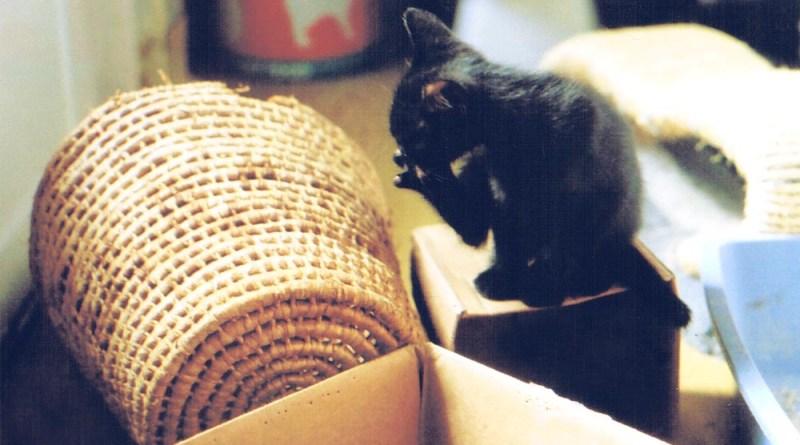 black kitten washing toes