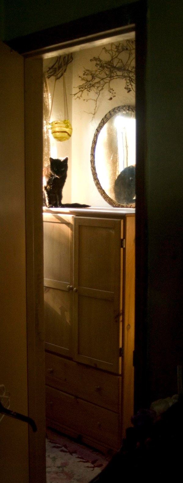Black cat watching through doorway