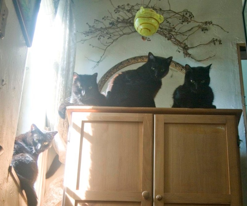 four black cats on wardrobe