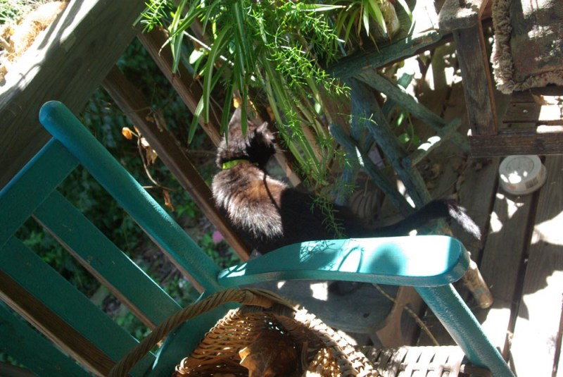 cat on stepstool among plants