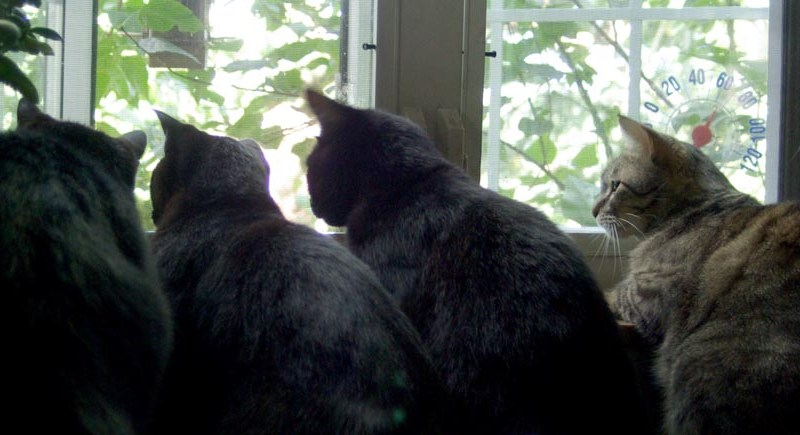 four cats staring out window
