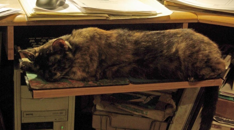 tortoiseshell cat on keyboard shelf