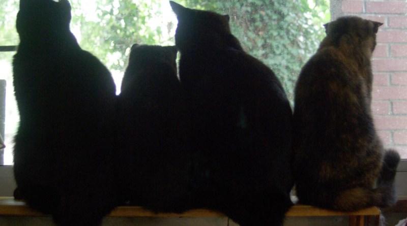four cat silhouettes