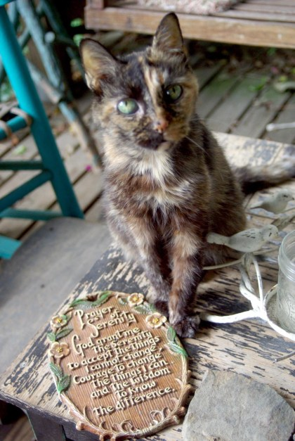 tortoiseshell cat with serenity prayer