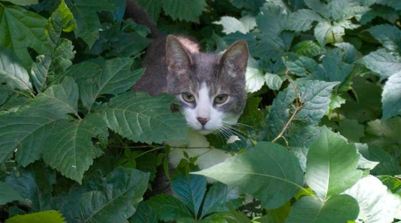 gray and white cat in leaves
