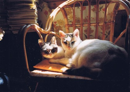 two calico cats on chair
