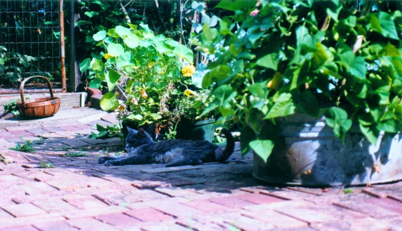 gray cat sleeping on bricks in garden