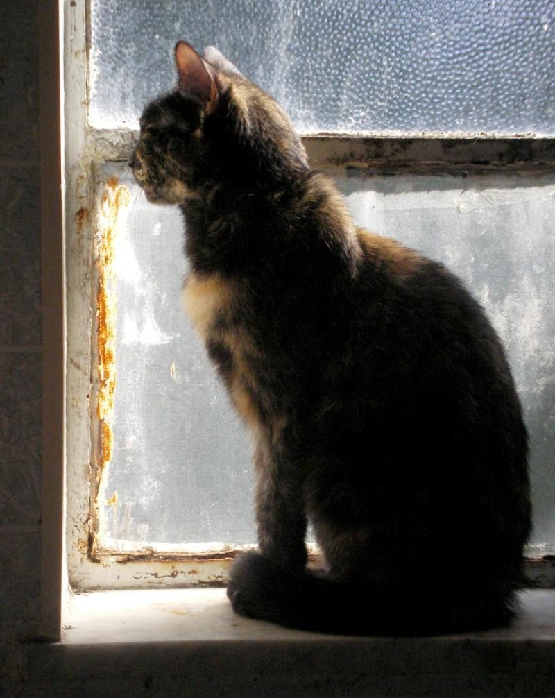 photo of cat on windowsil