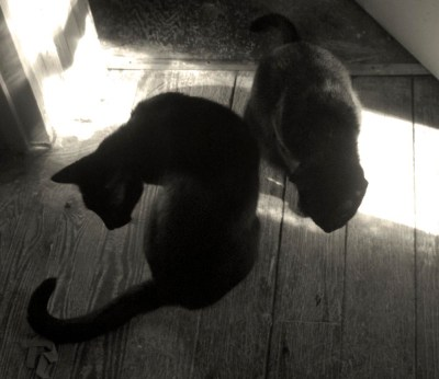 two black cats in sun and shadow