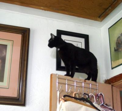 black cat on door