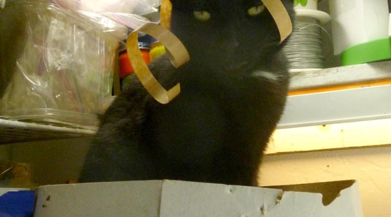 black cat with wrapping in his face