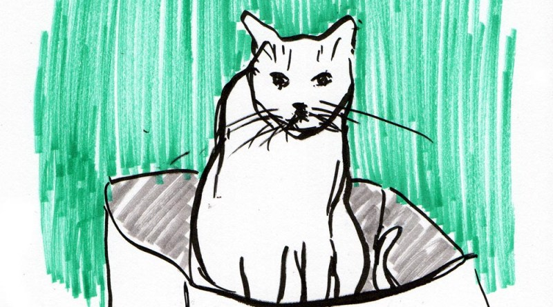 sketch of cat in box