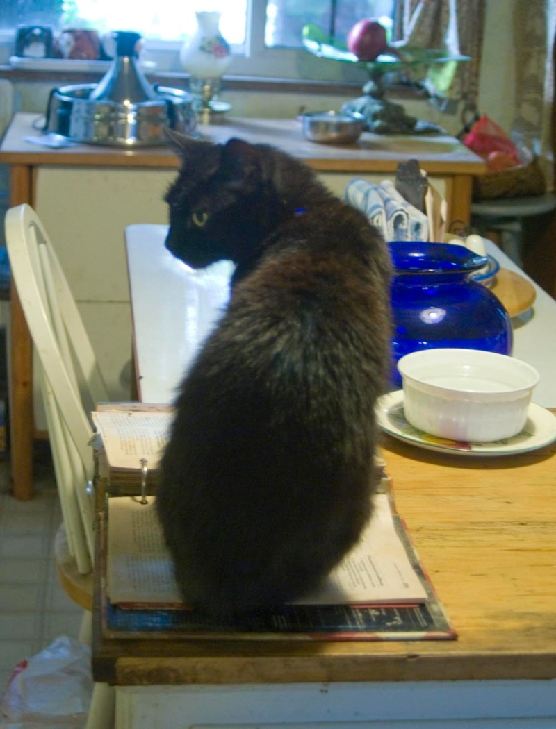 black cat sitting on cookbook