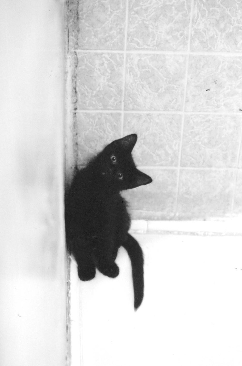 black kitten in corner of tub