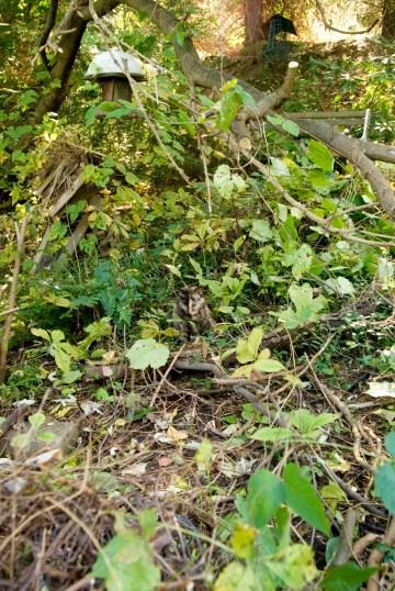 tortoiseshell cat in weeds
