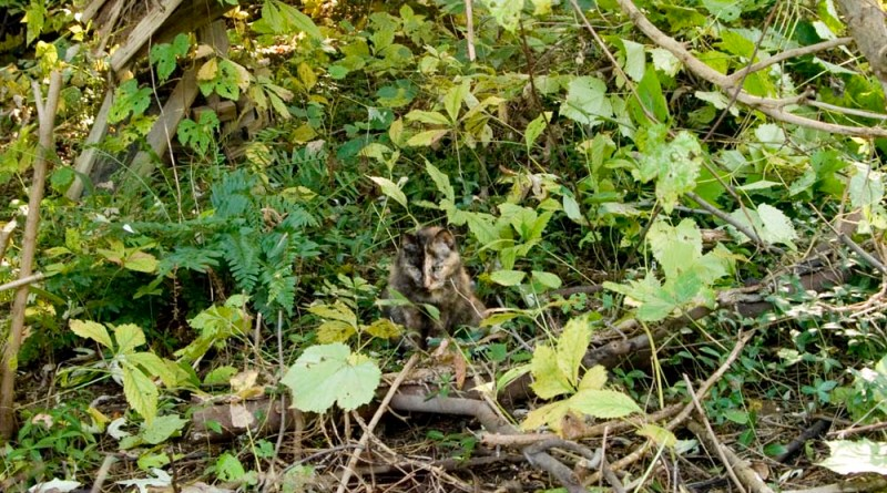 tortoiseshell cat in weeds