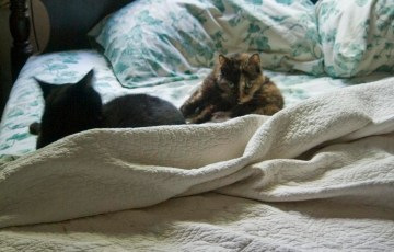 two cats sleeping on unmade bed